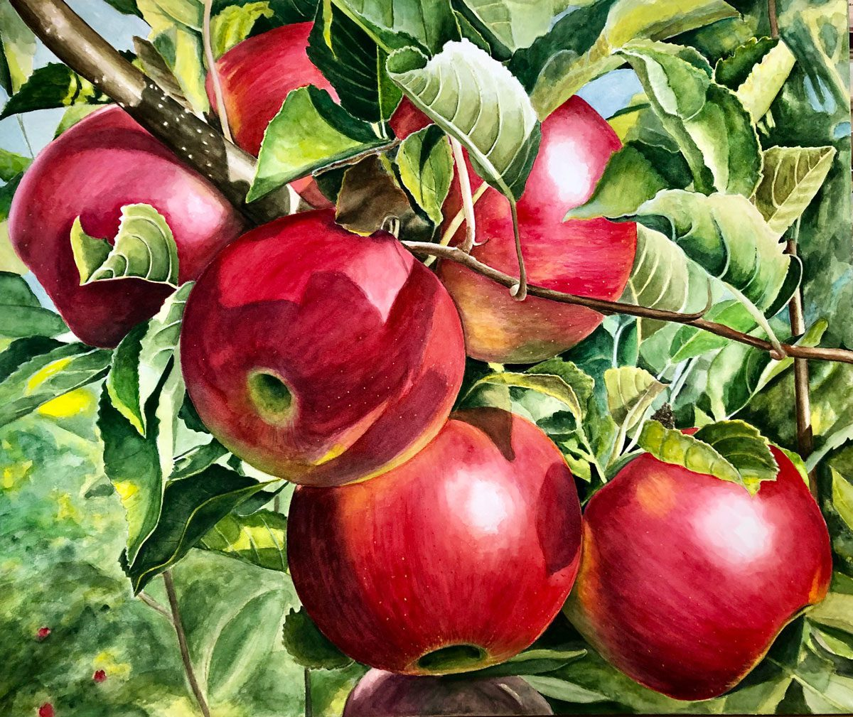 carol-corbett-apples-painting