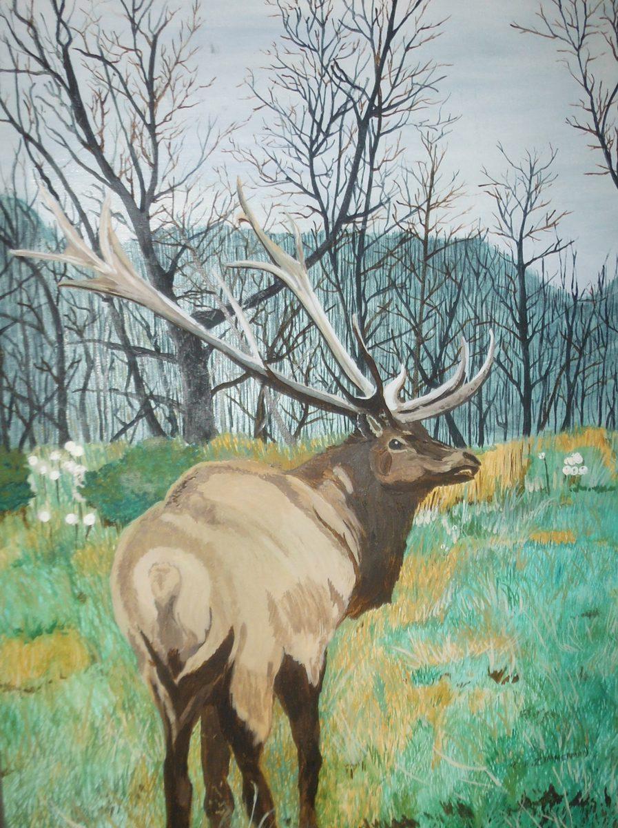 Thomas Zimmerman, Bull Elk