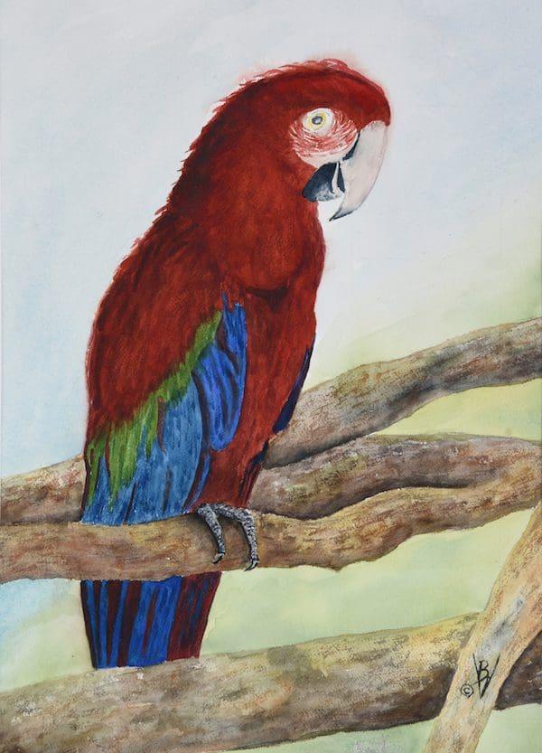 Bernard Vieille, Red Green Macaw